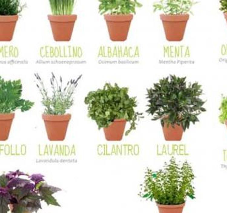 Taller cultivo y usos de plantas arom ticas uolala for Plantas aromaticas en macetas