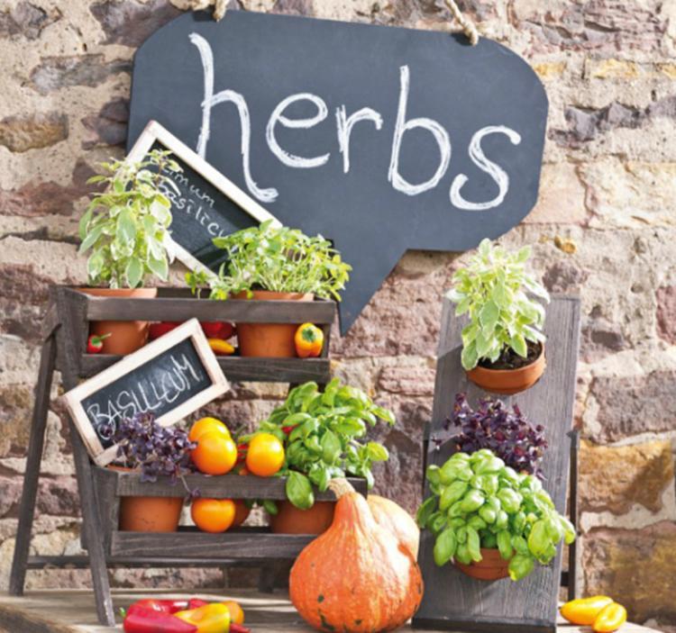 Taller las hierbas arom ticas en la cocina vegetariana ve - Plantas aromaticas en la cocina ...