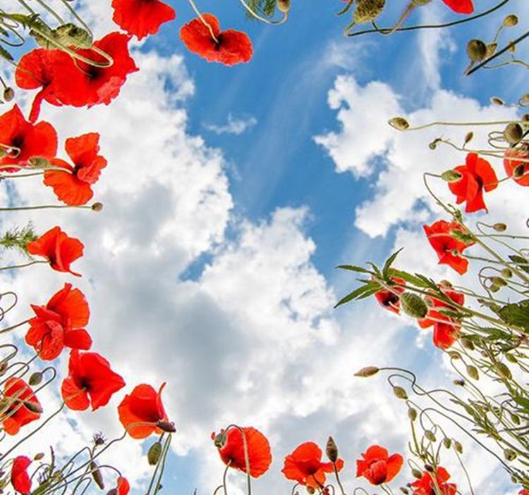 RITUAL DE PRIMAVERA: abriéndonos como las flores