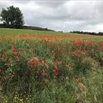 El Vallès a la primavera - 2