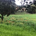 El Vallès a la primavera - 5