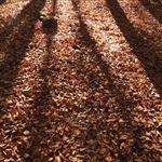 Fotografía con color de otoño - 0